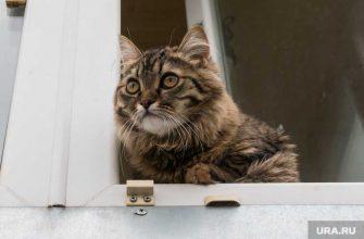 тюменские кошки коронавирус заболеваемость