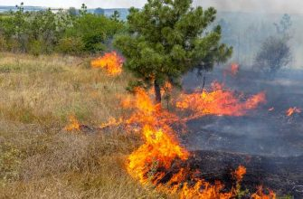 Уголовное дело Денежкин камень люди подожгли лес