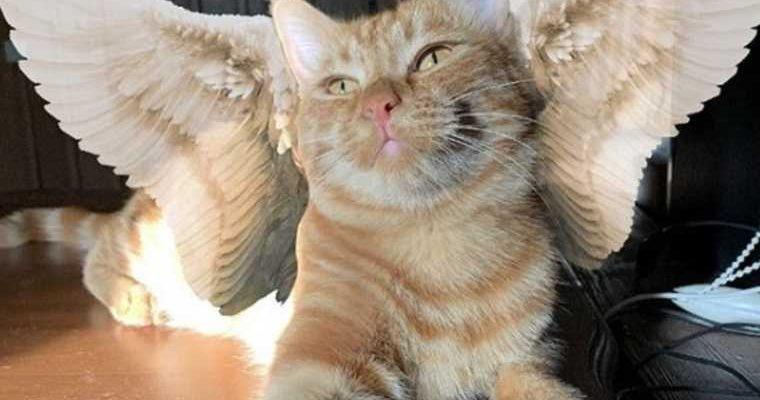 смерть кота Симбы