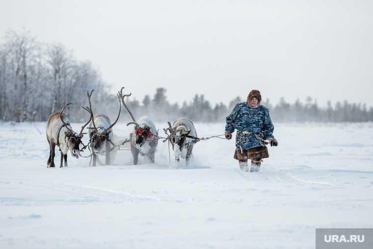 кочевники коренные народы севера