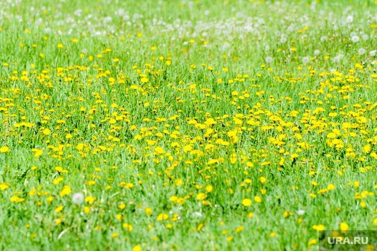 Челябинск погода весна