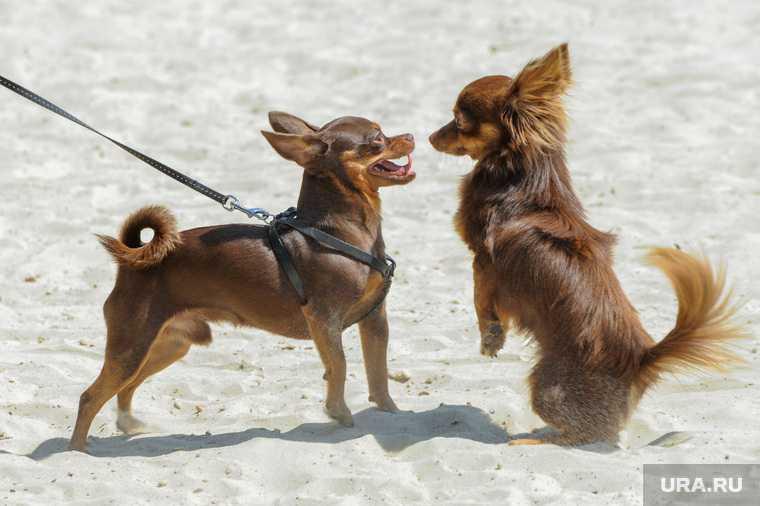 штраф за собак