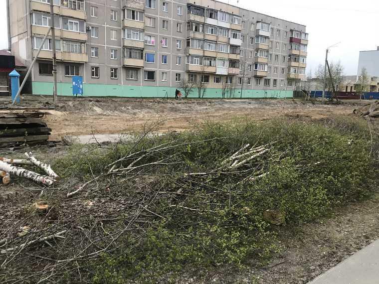 В городе ЯНАО массово вырубают деревья. Фото